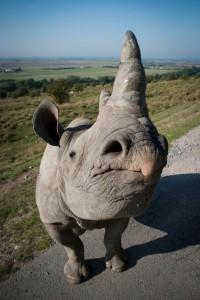 rhino-dhl