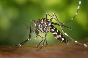 moustique et paludisme détéctable grace aux téléphones mobiles