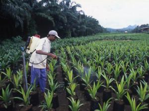plantation-de-palmiers-a-huile_afrique