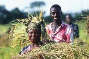 agriculture-familiale-2014-info-afrique.com