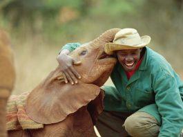 orphelinat éléphants