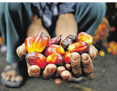 Huile de palme Afrique
