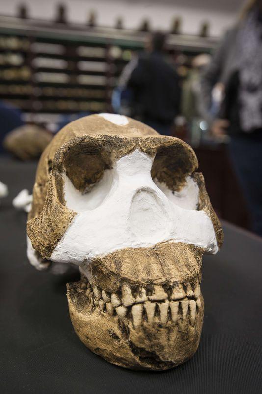 L'Homo Naledi découvert en Afrique du Sud
