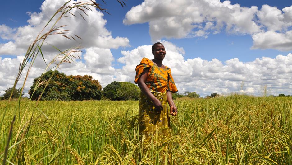 agriculture-afrique