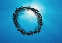 pêche illégale Afrique