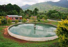 Une unité de production de Spiruline en Afrique