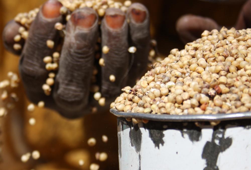 Arachides en Afrique