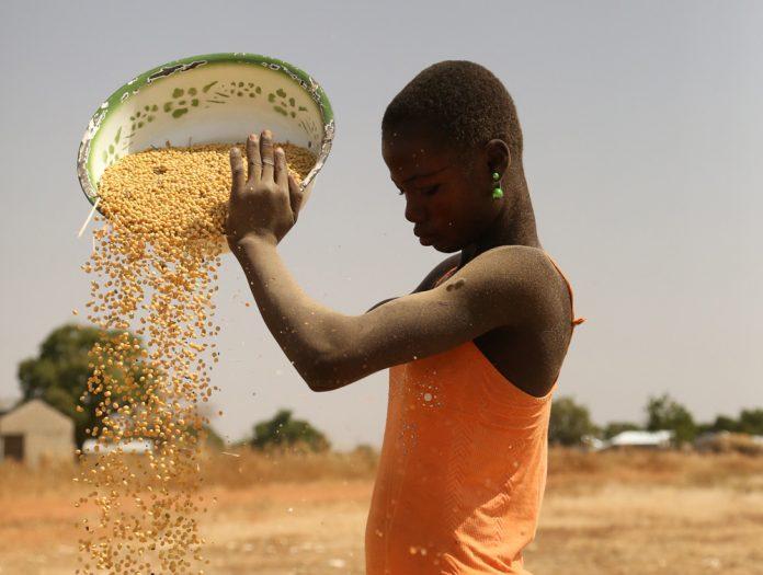 Femme burkinabé travaillant la séparation du grain et de la poussière avec le vent - Thierry Barbaut 2017