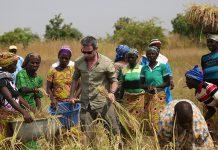 Programme de culture de riz et d'alphabétisation dans la région de Dapaong au Togo - Thierry Barbaut