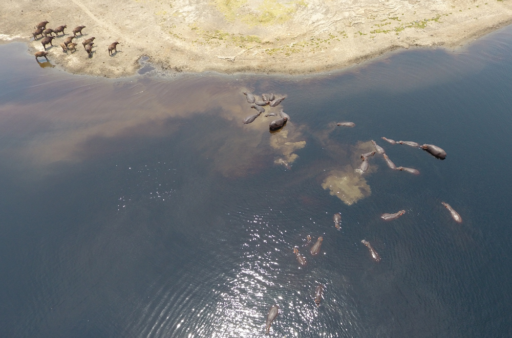 Hippopotames en Afrique - Crédits photos Thierry Barbaut - www.barbaut.net