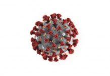 épidémie coronavirus covid-19