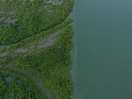 étude environnement Vattenfall
