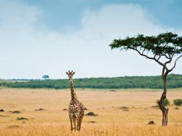 tourisme Afrique coronavirus