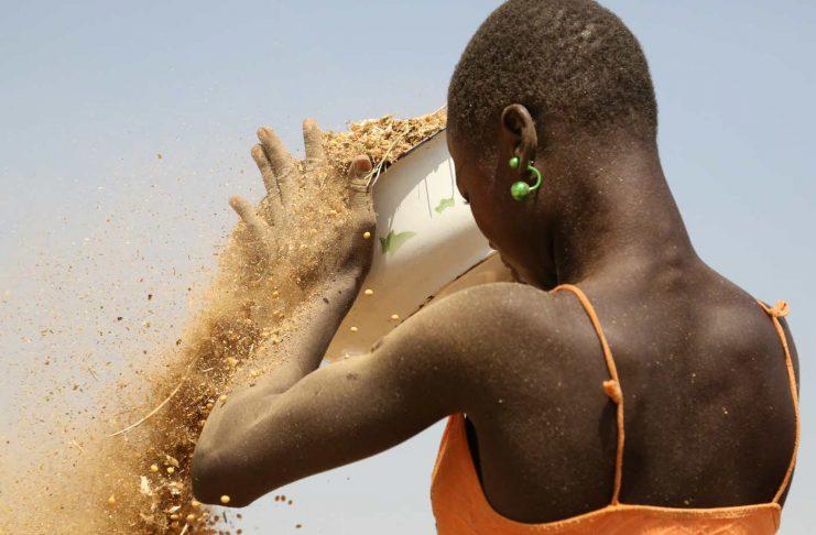 Les femmes dans l'agriculture en Afrique